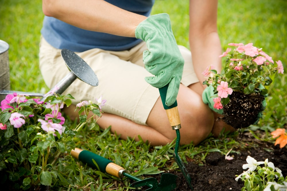 A summer health and wellness tip and summer health tip is to is to get gardening!